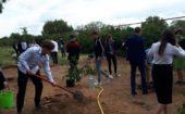 Сад памяти 4